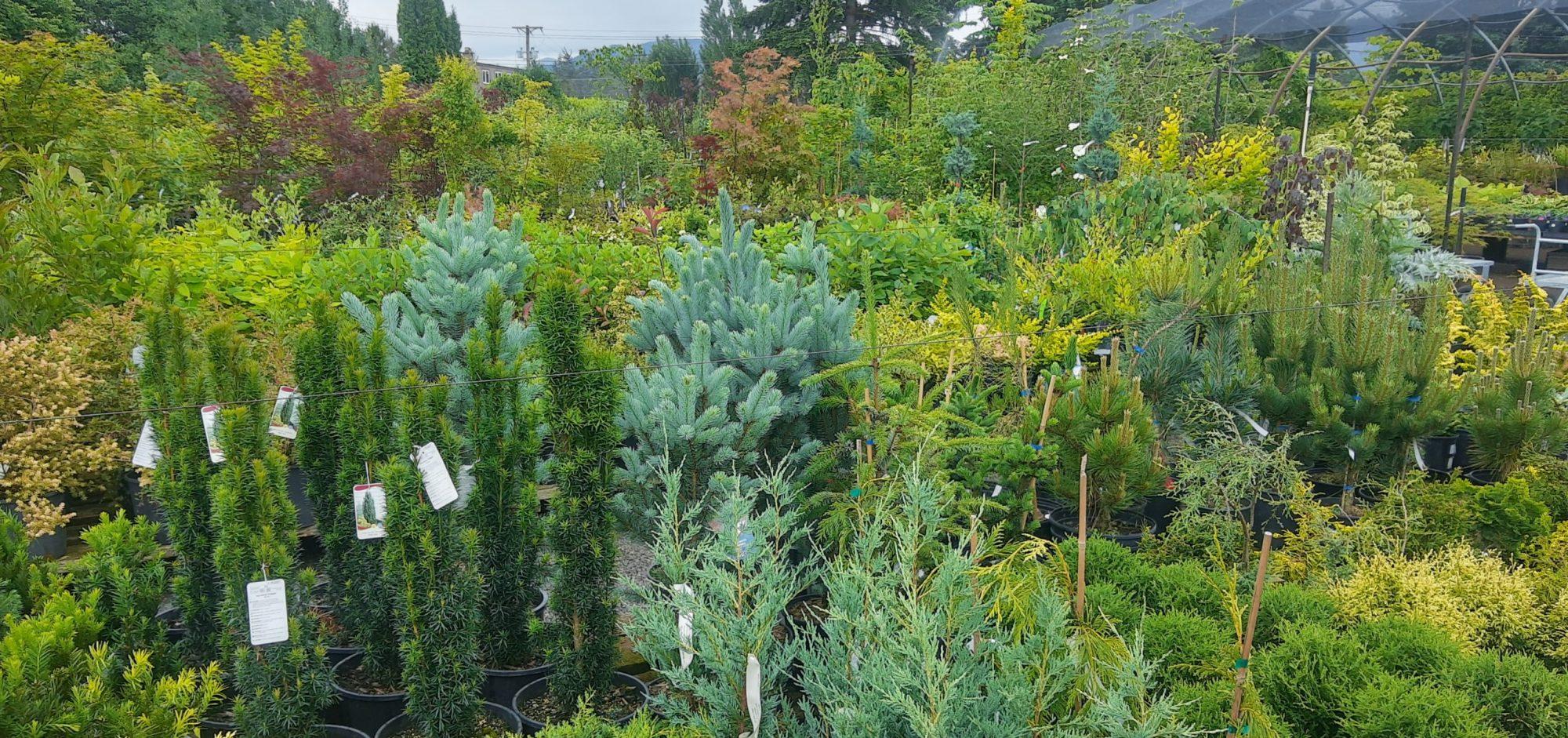 Colyn's Nursery & Garden Centre